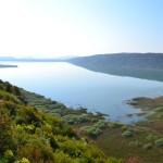 Hapi i Gjelbër dhe Green Life: TË HËNËN TRYEZË E RRUMBULLAKËT PËR LIQENIN E SHASIT