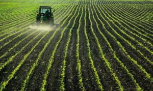 Bujqesi, Poljoprivreda
