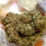 Skank, Marihuana, Hashash, Droga