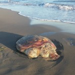 Breshka e detit