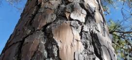 Peticion: Për ruajtjen e Pyllit të pishave dhe ndërtimin e një parku në Meteriz